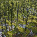 Junya Ishigami's poetic garden wins the first Obel Award