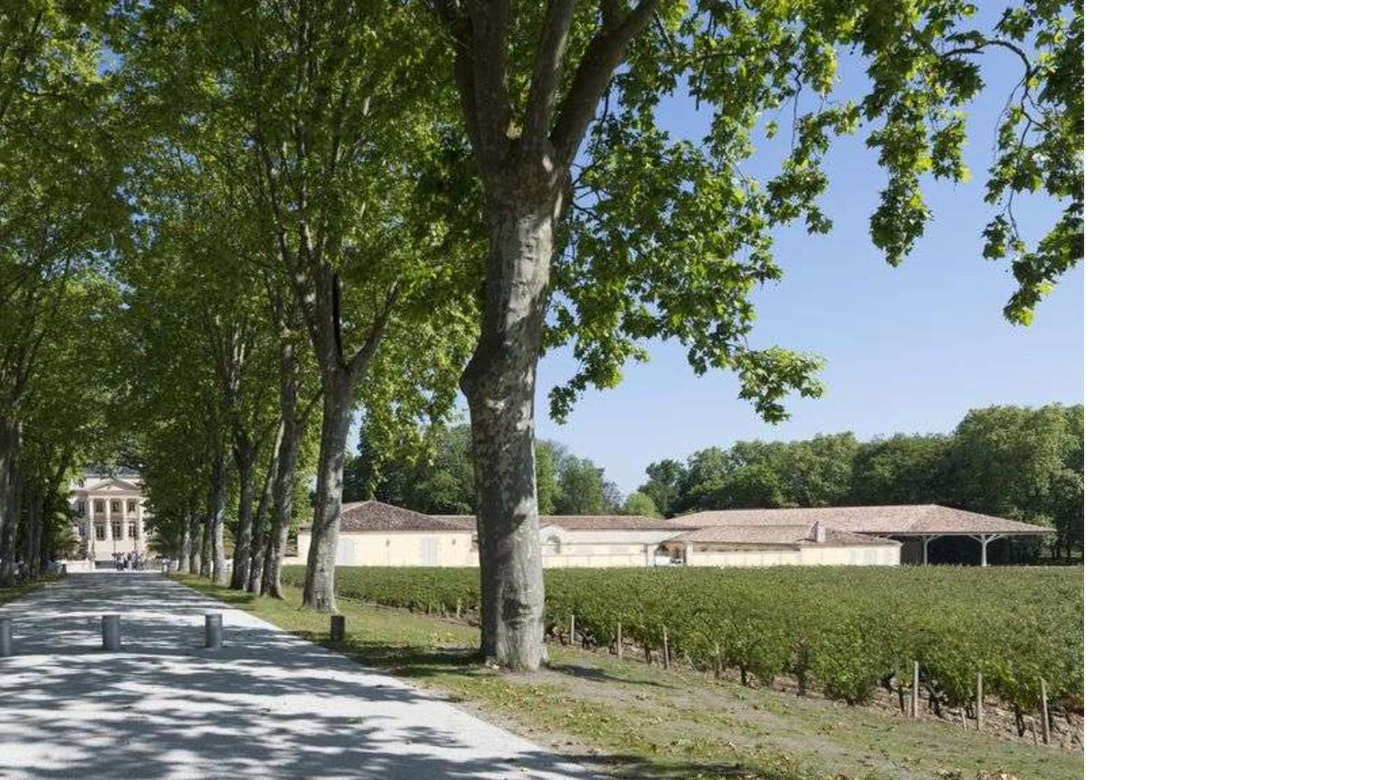 Foster+Partners at Chateau Margaux: expansion and renovation