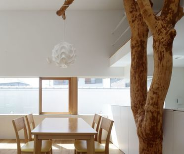 Ogawa: nature and architecture in the house with trees in Kagawa