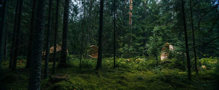 Estonia: giving the forest a voice.