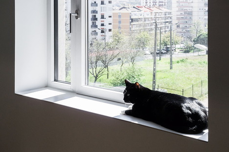 Apartment with cat by Miguel Marcelino