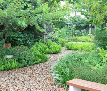 Therapeutic Landscape Design