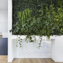 A living wall in the house renovated by naturehumaine