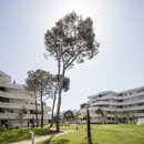 La Crique, housing that connects with its environment