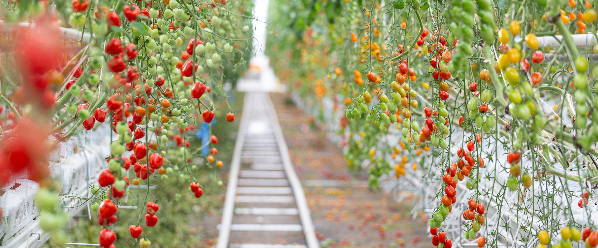 Lufa Farms 0km Fruit And Vegetables In Montreal Livegreenblog