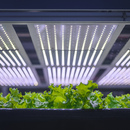 Locally grown produce with a Vertical Farm in Copenhagen