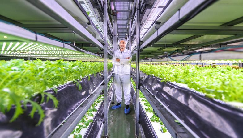 Locally grown produce with a Vertical Farm in Copenhagen