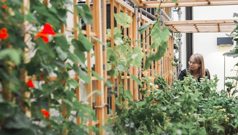 Kasvattamo, locally grown produce as interpreted by ROOH Studio