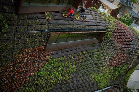 Vertical garden to integrate the existing building and the add-on
