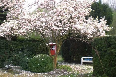 Garden with Magnolia. Courtesy of Klaus-Dieter Bürklein
