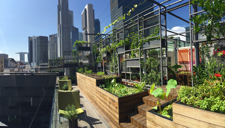 <strong>GREEN URBAN OASES</strong><br />